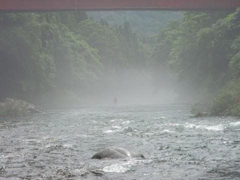 6月26日の鮎釣り