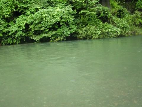 7月21日木曽川上流の鮎釣り