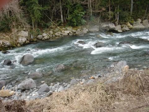 3月20日長良川アマゴ釣り