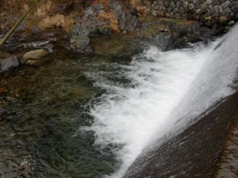3月24日揖保川アマゴ釣り