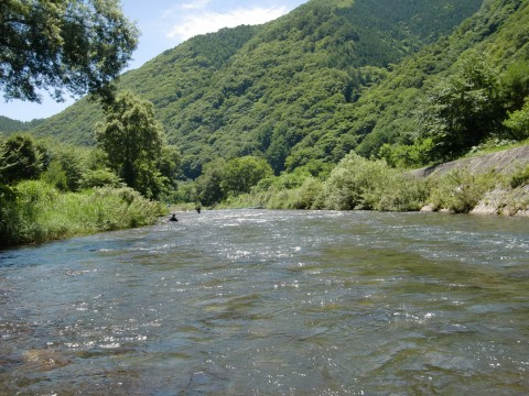 7月20,21日木曽川上流鮎釣り