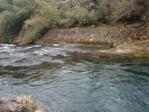 3月21日長良川アマゴ釣り